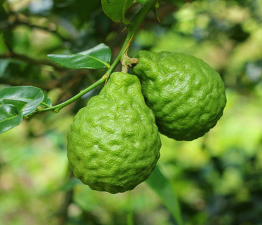 Fruit combawa